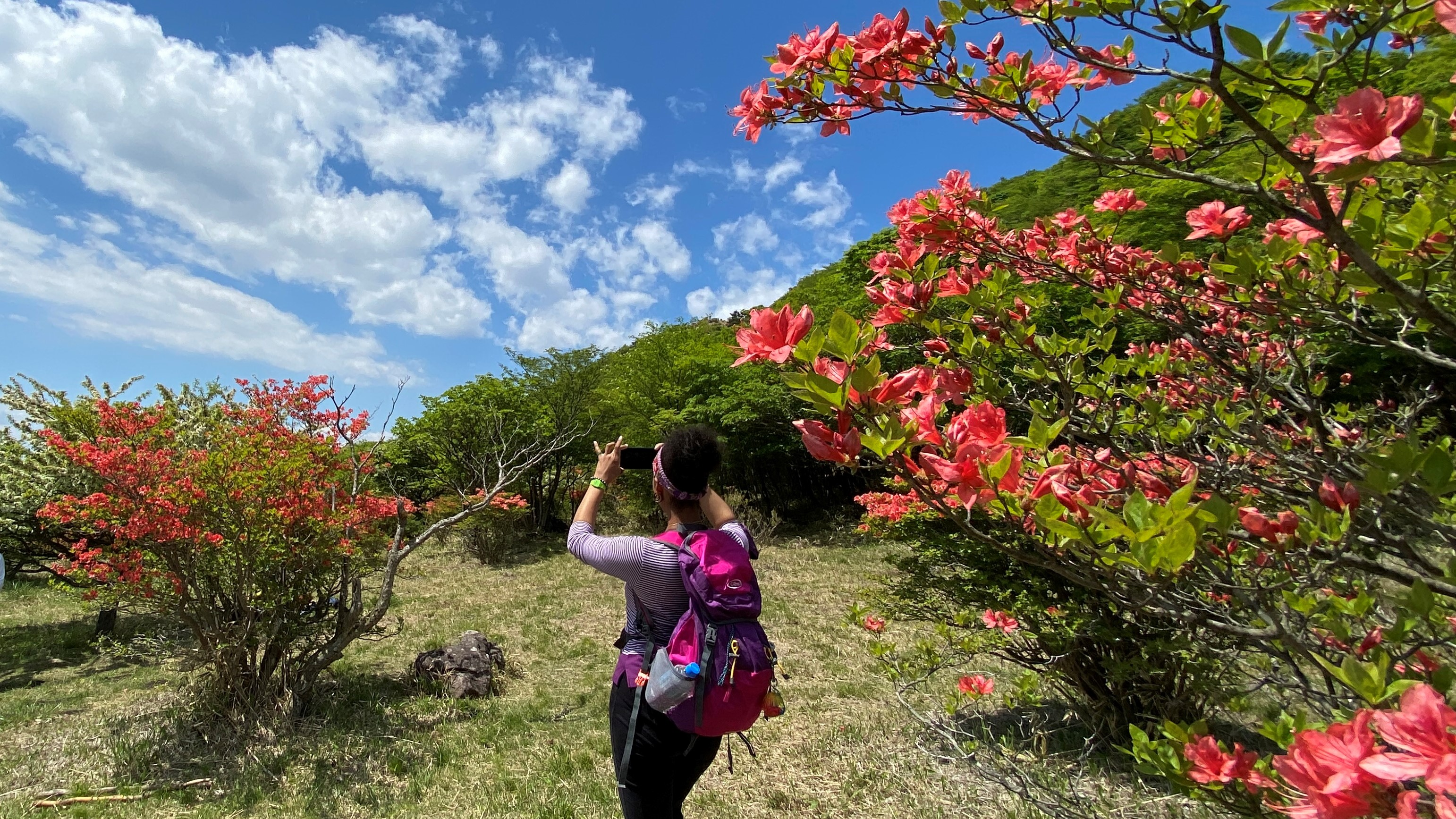 A hiker takes a picture of an azalea bush with her smartphone