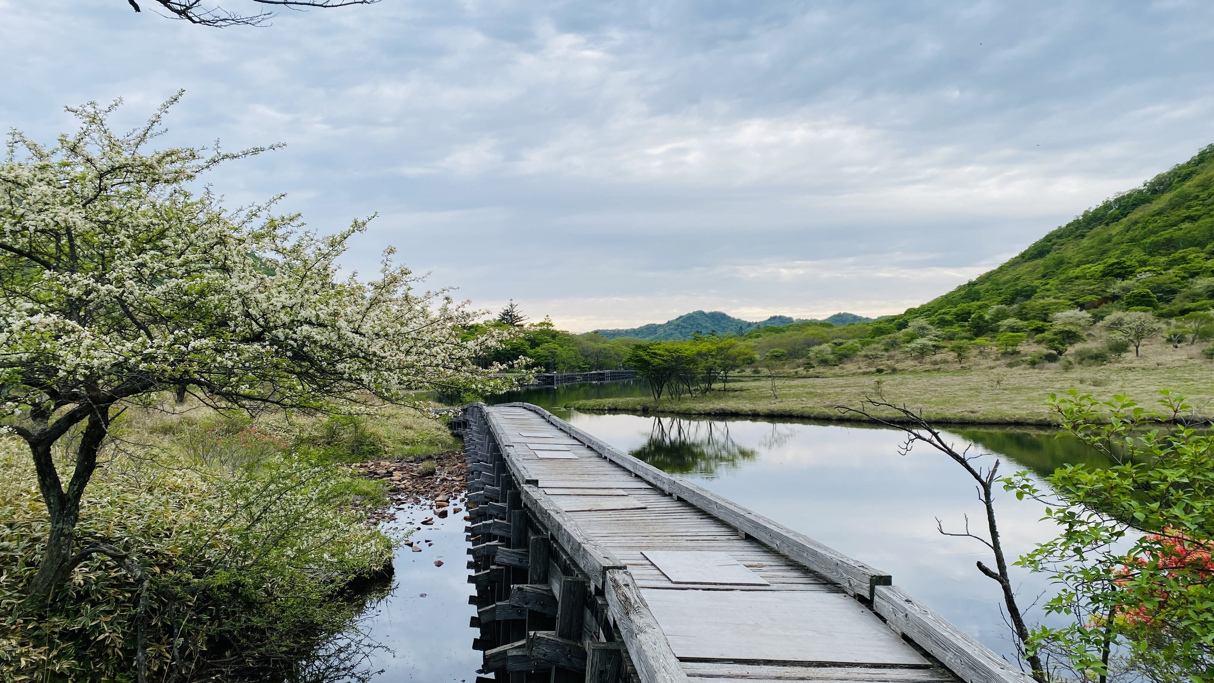 boardwalk across mirrored lake with white crabapple blossom tree on one side