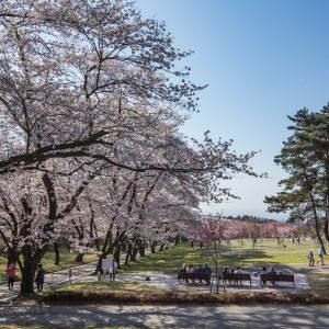 「平成30年赤城南面千本桜まつり」情報