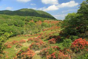 赤城山 秘密の絶景!普段は入れない「赤城白樺牧場」レンゲツツジと新緑 満喫ツアー
