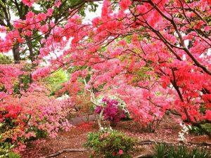 カネコ種苗ぐんまフラワーパーク 初夏の花園「つつじフェスタ」