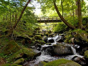 おいしく!楽しく!体験!黒保根水源の森づくりエコツアー