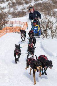 犬と楽しむ2日間! 犬ぞり&ザ・レース@赤城山【前橋ホワイトフェスティバル】