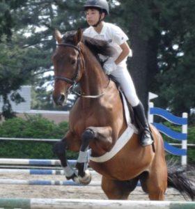 乗馬初心者のための体験乗馬 4回コース