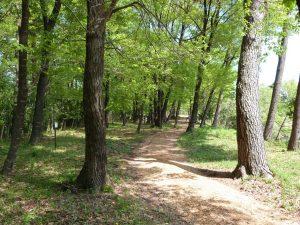 【期間限定】毎週土曜日、サンデンフォレストの森を無料開放しています!